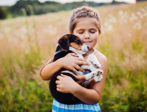 Las mejores 10 mascotas para niños