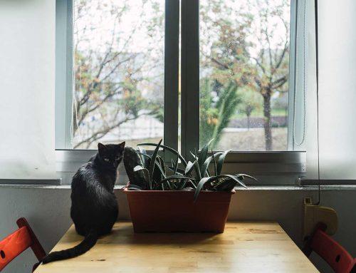 Mejores 10 plantas «pet friendly»